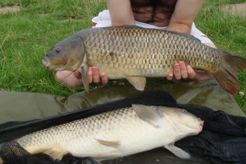 A brace of commons both over ten pounds, caught from Pool Hall Runs Water