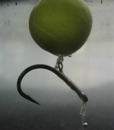Thumbnail Photo Claw Carp Rig