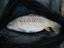 Picture Milton Pools carp 18lbs