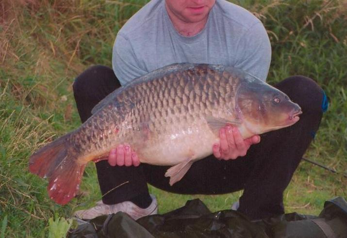 24 Pound Common from Lichfield UK