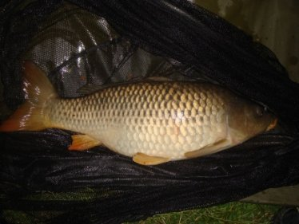 Image of carp caught Method