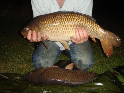 Carp senses how well can they see smell taste when feeding for Can you eat carp fish