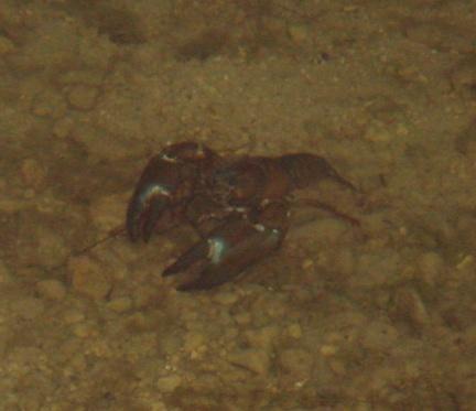 Image Crayfish Problems Fishing Break