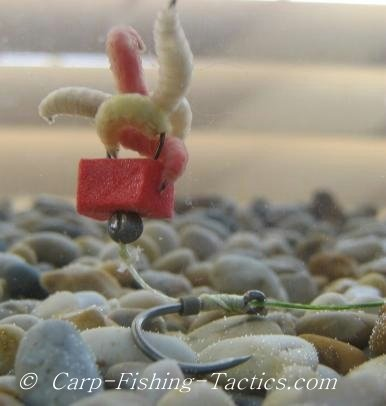 Image of balanced maggot ri