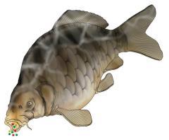 Sitemap of Articles for Carp-Fishing-Tactics.com